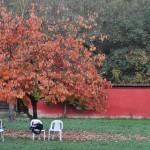 il nostro albero in autunno
